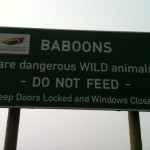 becca-hensley-don-not-feed-the-baboons