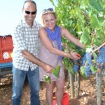 becca-hensley-grape-picking-in-montalcino