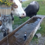 wine-and-cow-switzerland-becca-hensley