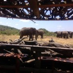 becca-hensley-elephants-at-ol-donyo-kenya-africa