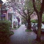 becca-hensley-nob-hill-after-the-rain-portland-oregon.jpg